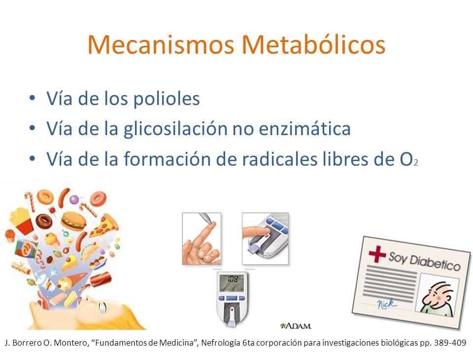 Mecanismos Metabólicos Vía de los polioles Vía de la glicosilación no enzimática Vía de la formación de radicales libres de O 2 J. Borrero O. Montero,