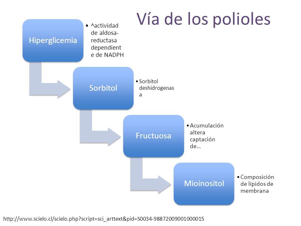 Vía de los polioles Hiperglicemia ^actividad de aldosa- reductasa dependient e de NADPH Sorbitol Sorbitol deshidrogenas a Fructuosa Acumulación altera