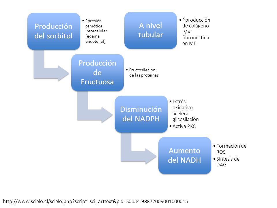 Producción del sorbitol ^presión osmótica intracelular (edema endotelial) Producción de Fructuosa Fructosilación de las proteínas Disminución del NADP