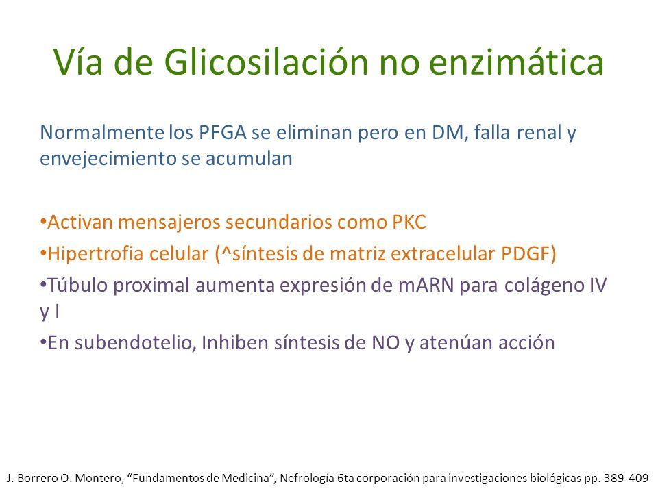 Vía de Glicosilación no enzimática Normalmente los PFGA se eliminan pero en DM, falla renal y envejecimiento se acumulan Activan mensajeros secundario