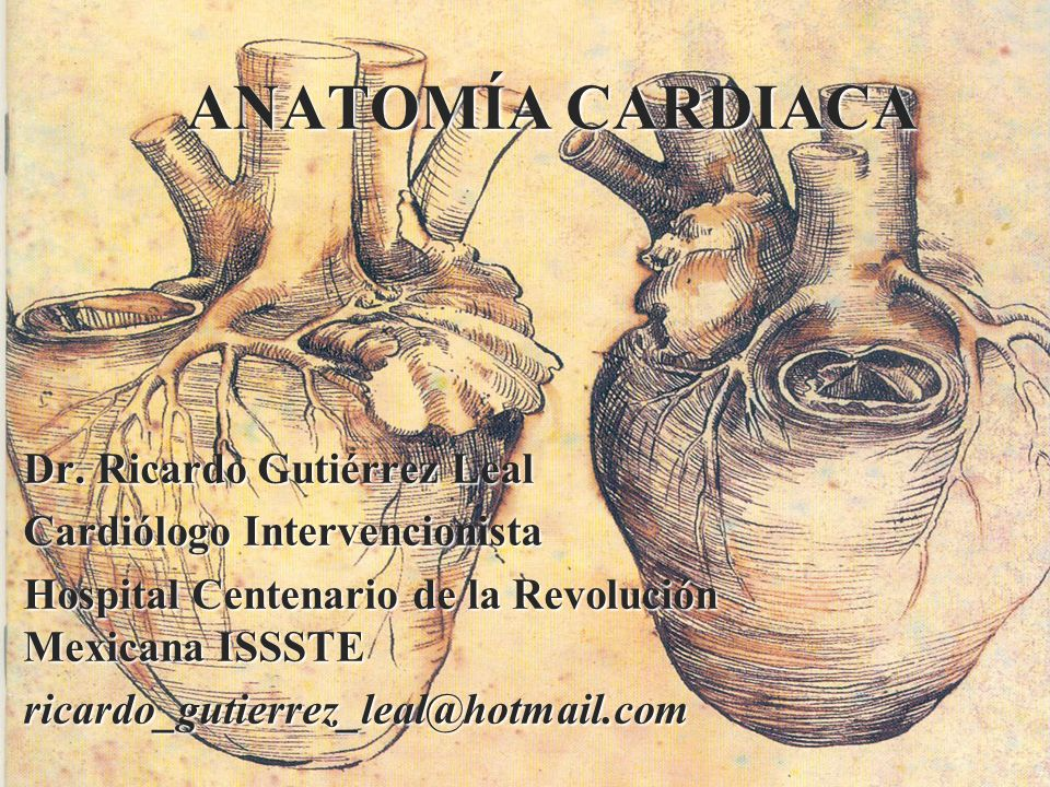 ANATOMÍA CARDIACA Dr. Ricardo Gutiérrez Leal Cardiólogo Intervencionista Hospital Centenario de la Revolución Mexicana ISSSTE ricardo_gutierrez_leal@h