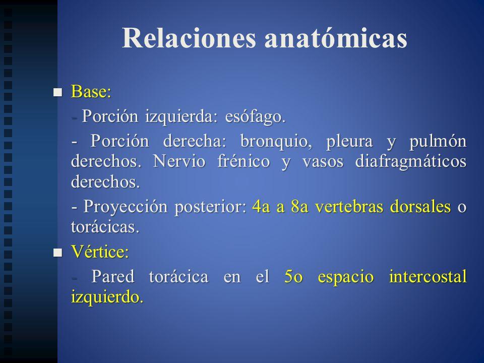 Relaciones anatómicas Base: Base: - Porción izquierda: esófago. - Porción derecha: bronquio, pleura y pulmón derechos. Nervio frénico y vasos diafragm