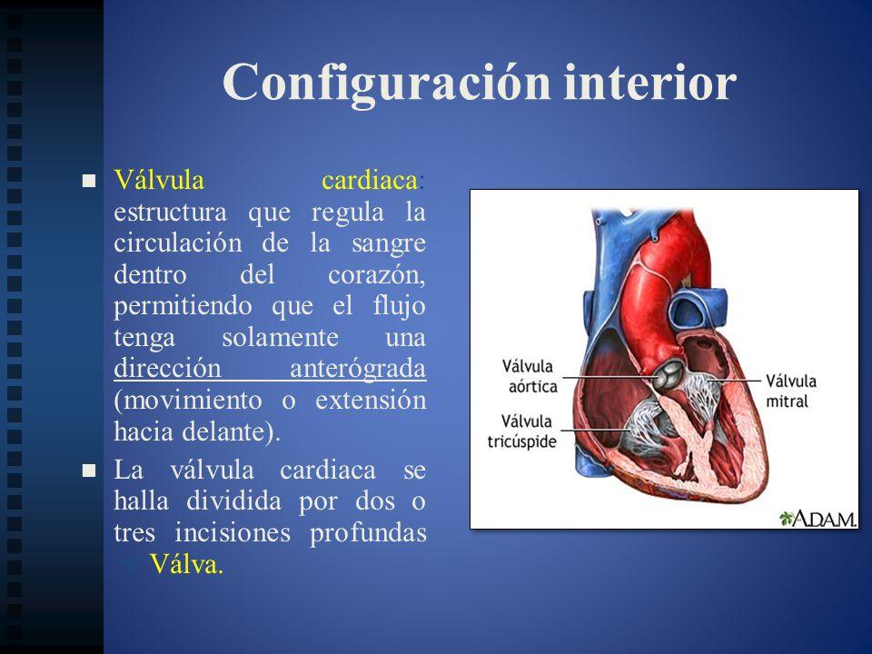 Configuración interior Válvula cardiaca: estructura que regula la circulación de la sangre dentro del corazón, permitiendo que el flujo tenga solament