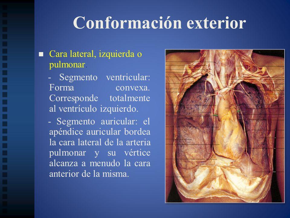 Relaciones anatómicas Base: Base: - Porción izquierda: esófago.