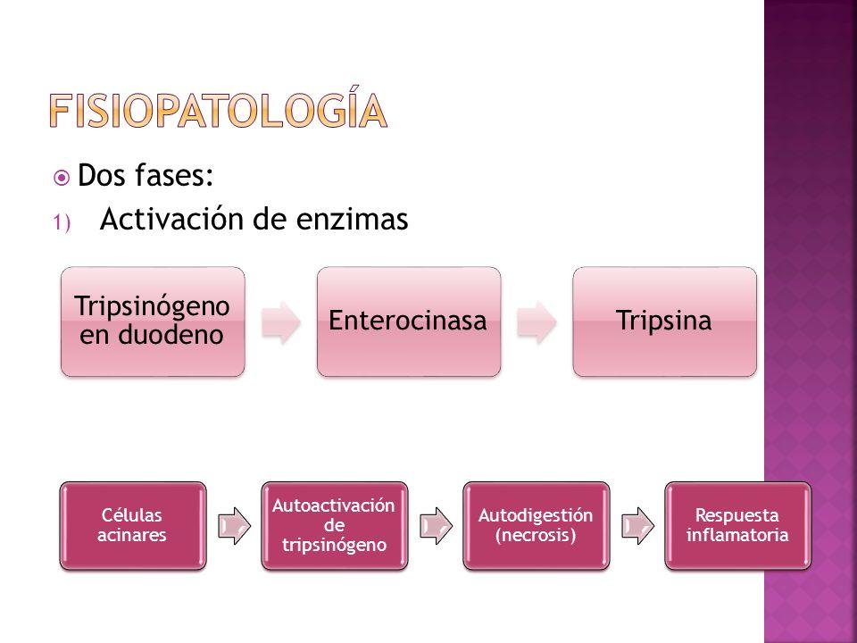 Dos fases: 1) Activación de enzimas Posibles causas: a.