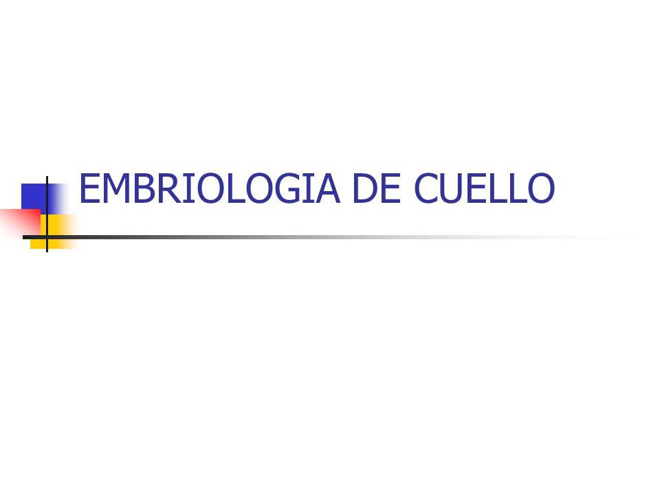ARCOS BRANQUIALES 1.MANDIBULAR - TRIGEMINO (MAXILAR INFERIOR), CARTILAGO DE MECKEL 2.