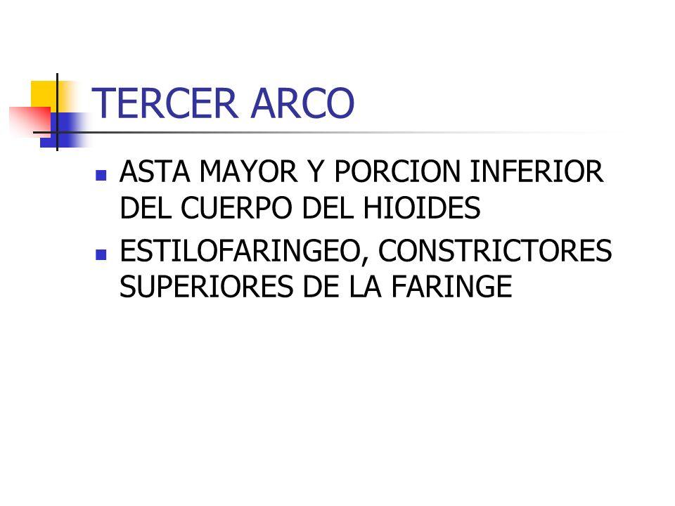 TERCER ARCO ASTA MAYOR Y PORCION INFERIOR DEL CUERPO DEL HIOIDES ESTILOFARINGEO, CONSTRICTORES SUPERIORES DE LA FARINGE