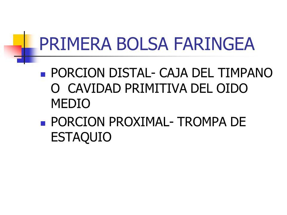 PRIMERA BOLSA FARINGEA PORCION DISTAL- CAJA DEL TIMPANO O CAVIDAD PRIMITIVA DEL OIDO MEDIO PORCION PROXIMAL- TROMPA DE ESTAQUIO