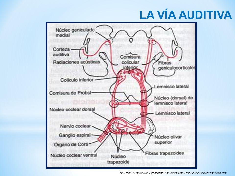 RELEVOS IMPORTANTES DE LA VÍA AUDITIVA ONDAS EN EL PAETCLUGAR DE RELEVO ONDA IPorción distal del nervio auditivo.