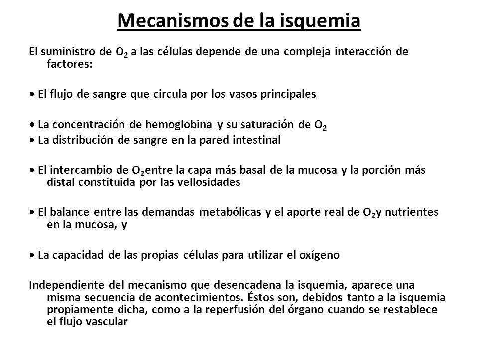 Mecanismos de la isquemia El suministro de O 2 a las células depende de una compleja interacción de factores: El flujo de sangre que circula por los v