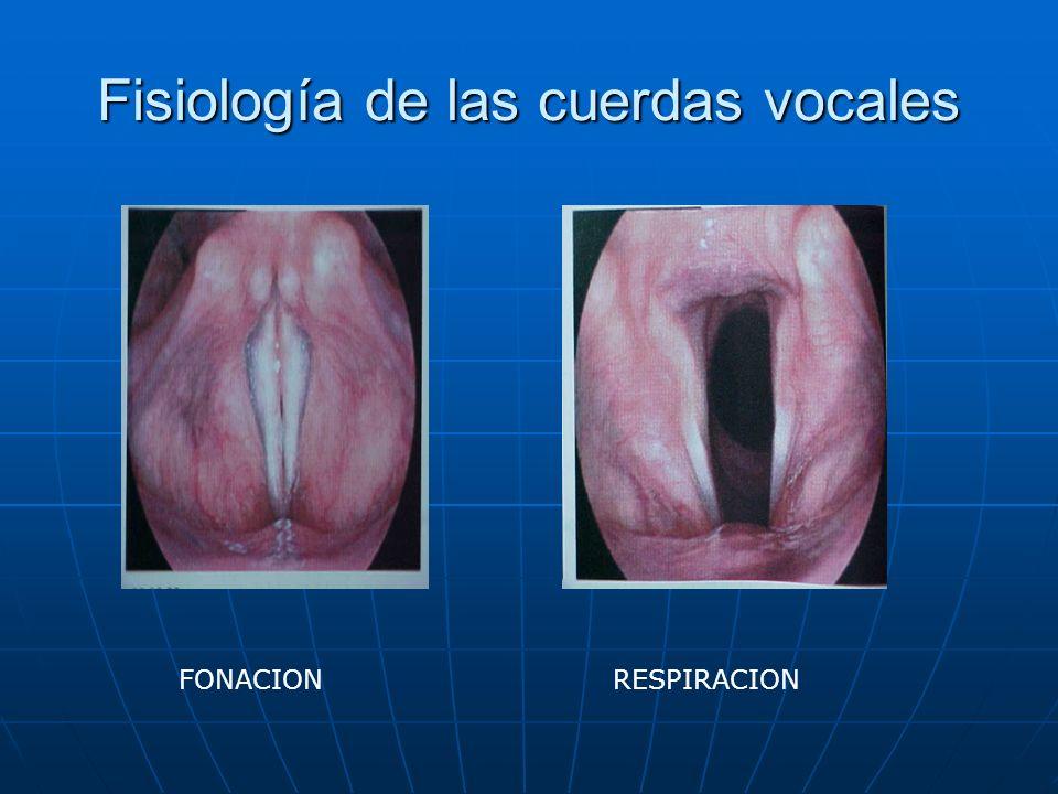 Fisiología de las cuerdas vocales FONACIONRESPIRACION