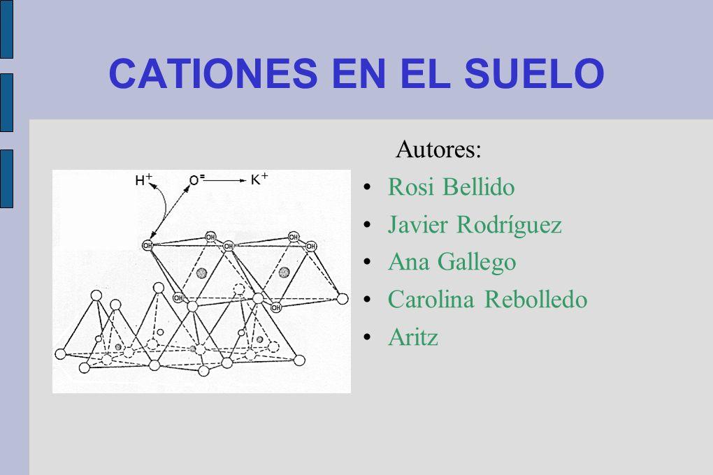 CATIONES EN EL SUELO Autores: Rosi Bellido Javier Rodríguez Ana Gallego Carolina Rebolledo Aritz