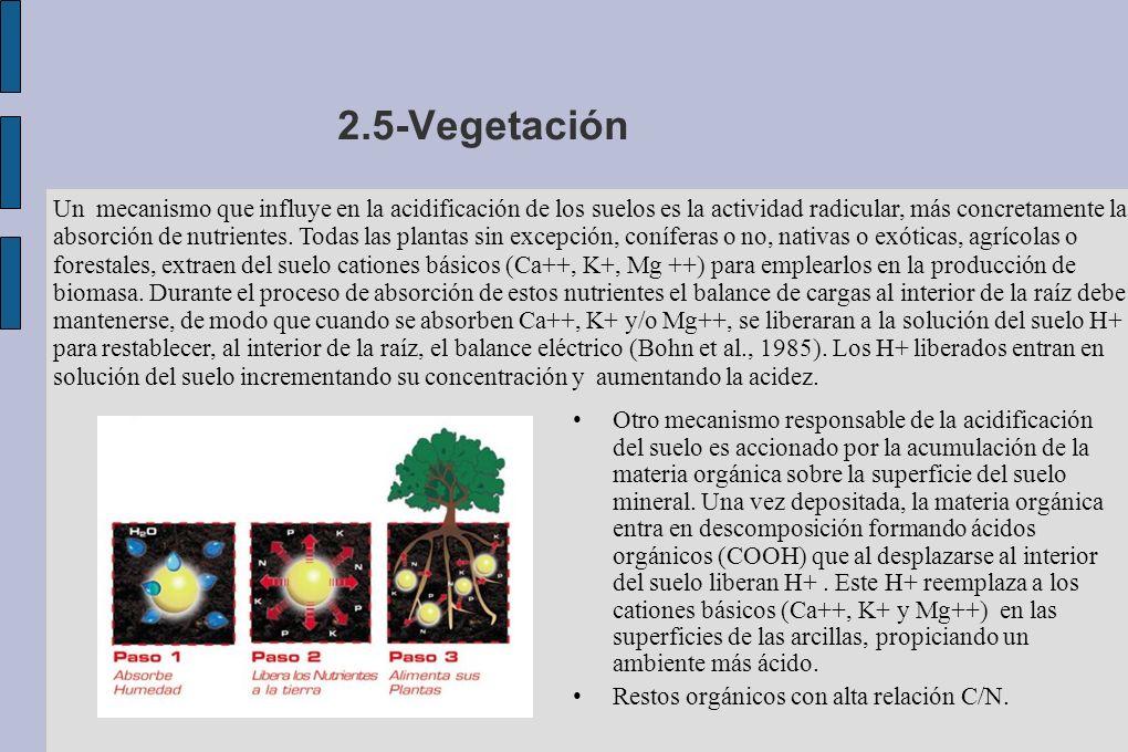 2.5-Vegetación Otro mecanismo responsable de la acidificación del suelo es accionado por la acumulación de la materia orgánica sobre la superficie del