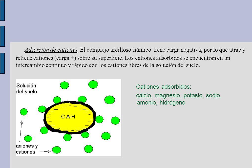 Adsorción de cationes. El complejo arcilloso-húmico tiene carga negativa, por lo que atrae y retiene cationes (carga +) sobre su superficie. Los catio