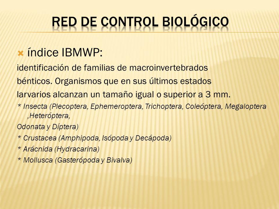 índice IBMWP: identificación de familias de macroinvertebrados bénticos. Organismos que en sus últimos estados larvarios alcanzan un tamaño igual o su