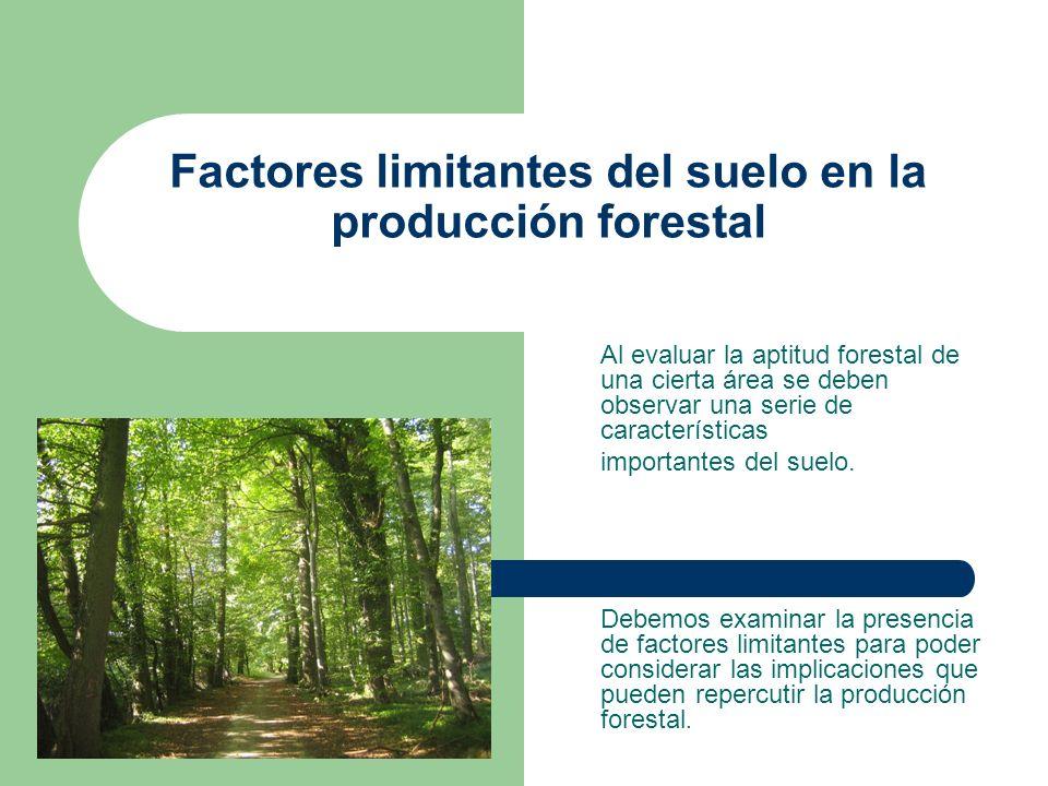 Factores limitantes del suelo en la producción forestal Al evaluar la aptitud forestal de una cierta área se deben observar una serie de característic