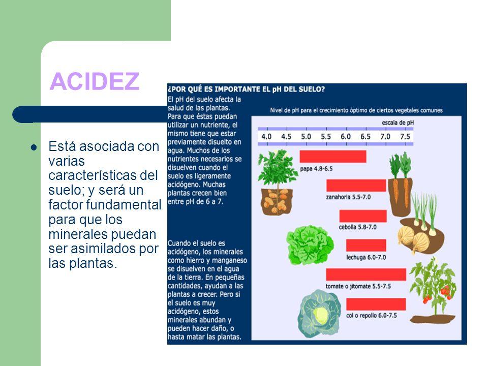 ACIDEZ Está asociada con varias características del suelo; y será un factor fundamental para que los minerales puedan ser asimilados por las plantas.