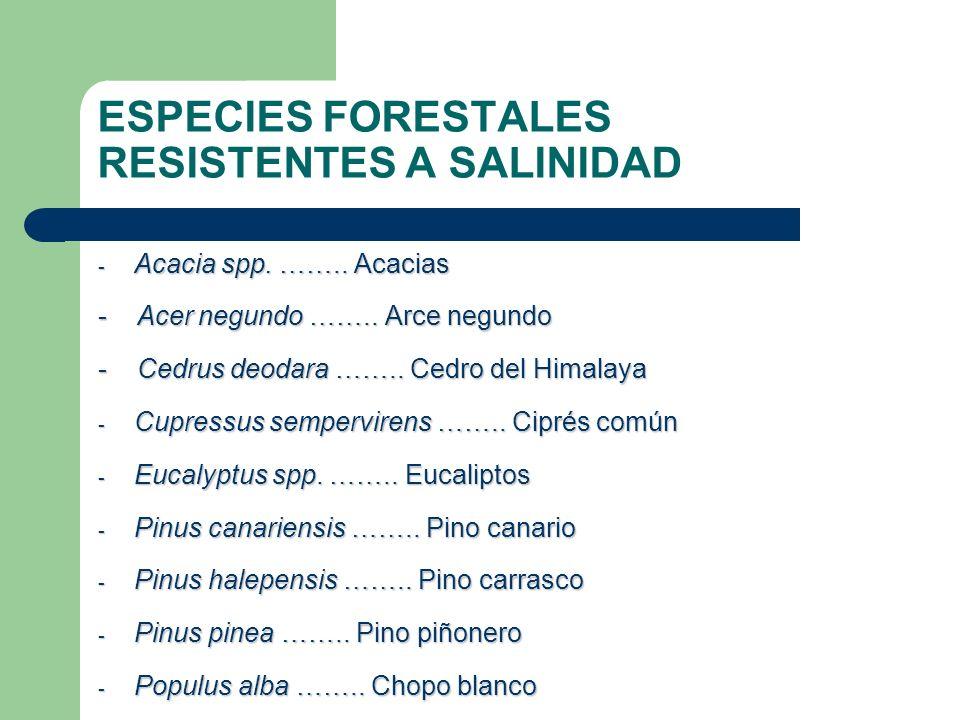 ESPECIES FORESTALES RESISTENTES A SALINIDAD - Acacia spp. …….. Acacias - Acer negundo …….. Arce negundo - Cedrus deodara …….. Cedro del Himalaya - Cup