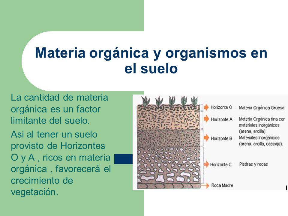 Materia orgánica y organismos en el suelo La cantidad de materia orgánica es un factor limitante del suelo. Asi al tener un suelo provisto de Horizont