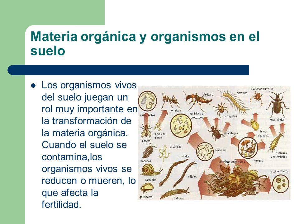 Materia orgánica y organismos en el suelo Los organismos vivos del suelo juegan un rol muy importante en la transformación de la materia orgánica. Cua