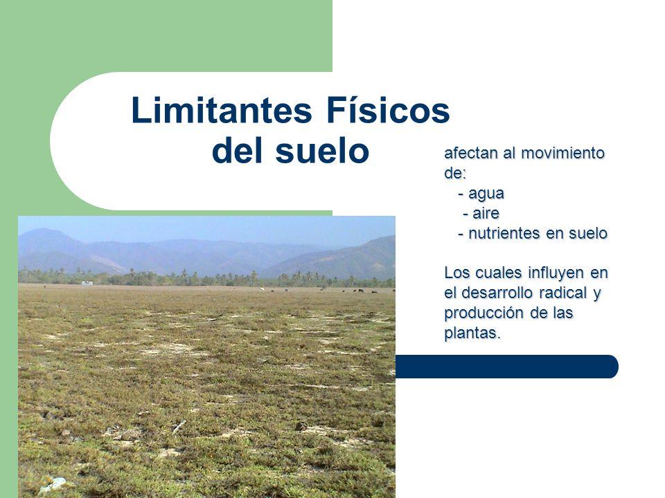 Limitantes Físicos del suelo afectan al movimiento de: - agua - agua - aire - aire - nutrientes en suelo - nutrientes en suelo Los cuales influyen en