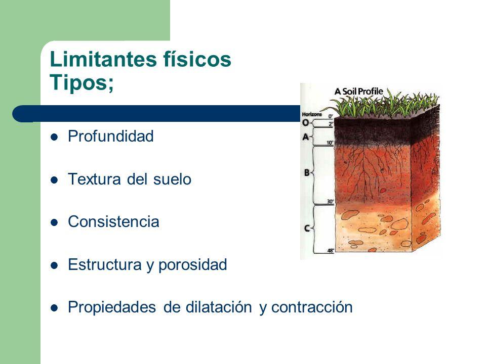 Profundidad factor limitante para el desarrollo de las raíces Los efectos de la poca profundidad se traducen en un menor desarrollo del sistema radical de las plantas y, por lo tanto, un menor desarrollo de la planta en su conjunto, lo que redunda en una menor producción.