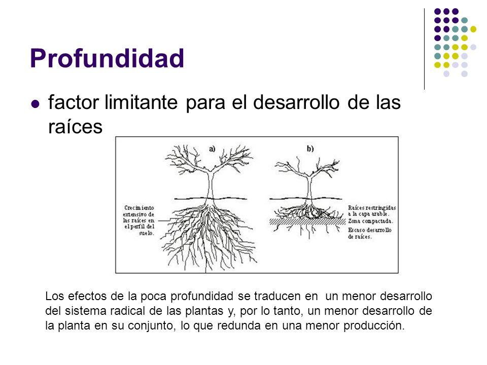 Profundidad factor limitante para el desarrollo de las raíces Los efectos de la poca profundidad se traducen en un menor desarrollo del sistema radica