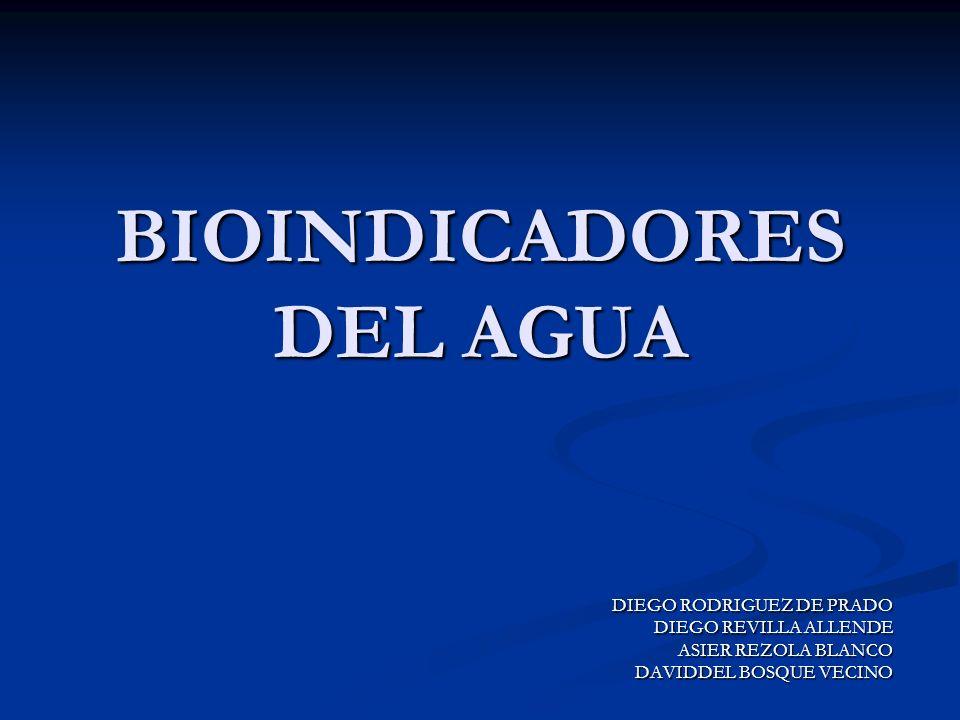 BIOINDICADORES DEL AGUA DIEGO RODRIGUEZ DE PRADO DIEGO REVILLA ALLENDE ASIER REZOLA BLANCO DAVIDDEL BOSQUE VECINO