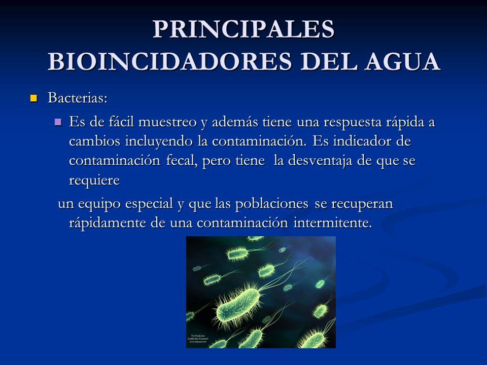 PRINCIPALES BIOINCIDADORES DEL AGUA Bacterias: Bacterias: Es de fácil muestreo y además tiene una respuesta rápida a cambios incluyendo la contaminaci