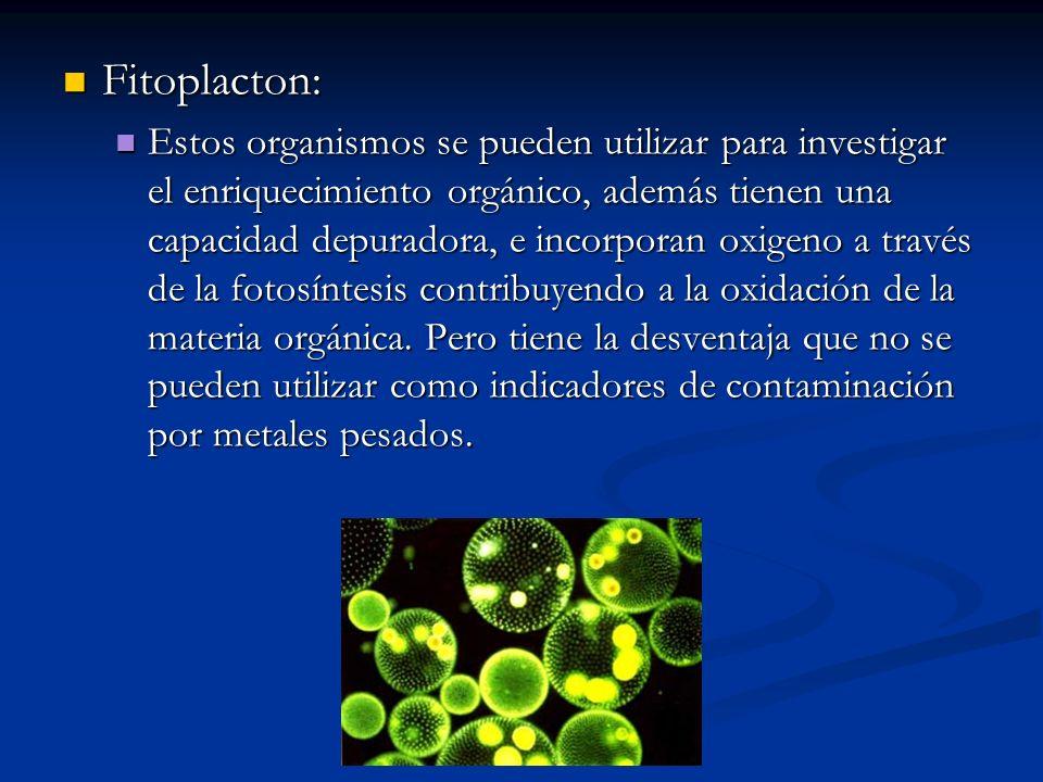 Fitoplacton: Fitoplacton: Estos organismos se pueden utilizar para investigar el enriquecimiento orgánico, además tienen una capacidad depuradora, e i
