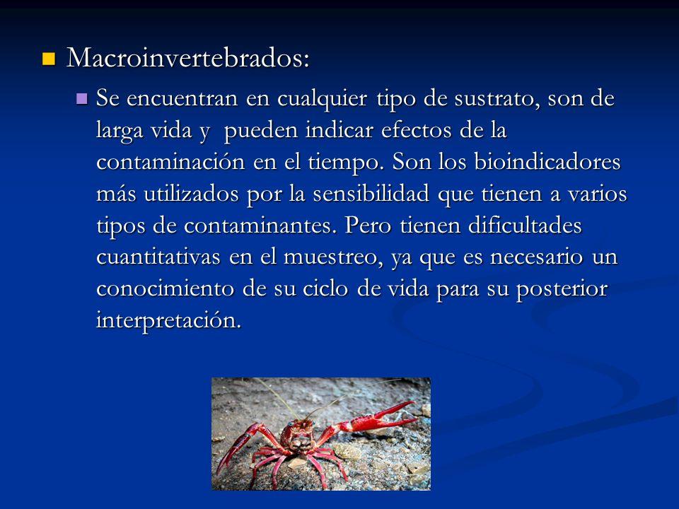 Macroinvertebrados: Macroinvertebrados: Se encuentran en cualquier tipo de sustrato, son de larga vida y pueden indicar efectos de la contaminación en