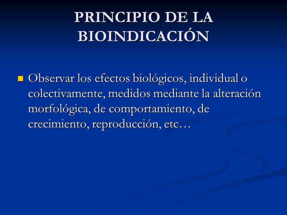 PRINCIPIO DE LA BIOINDICACIÓN Observar los efectos biológicos, individual o colectivamente, medidos mediante la alteración morfológica, de comportamie