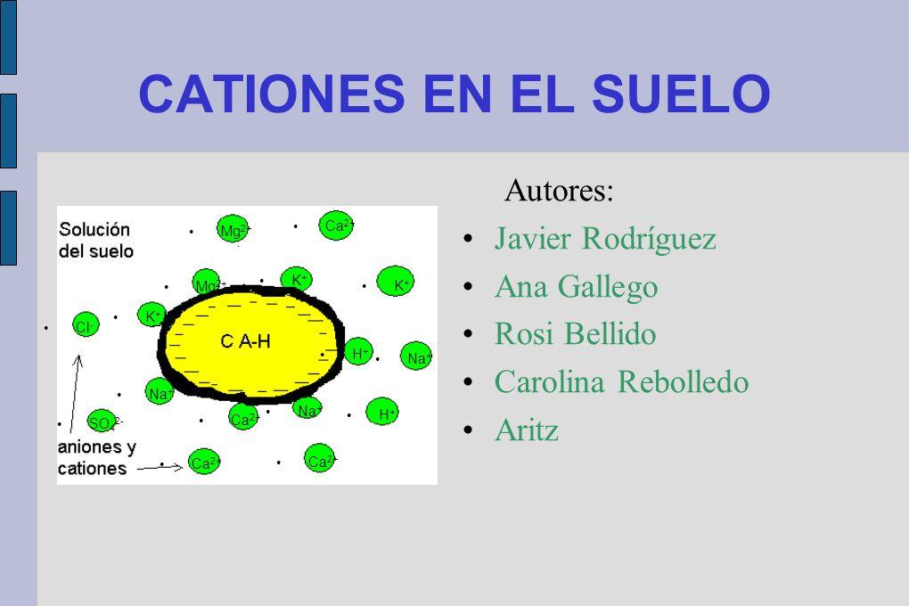 CATIONES EN EL SUELO Autores: Javier Rodríguez Ana Gallego Rosi Bellido Carolina Rebolledo Aritz Ca 2+ Mg 2+ K + Na + H + Ca 2+ Cl - K + SO 4 2- Na +
