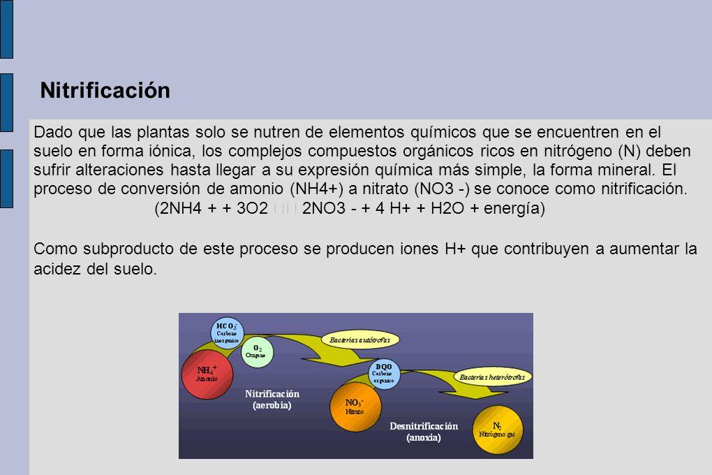 Nitrificación Dado que las plantas solo se nutren de elementos químicos que se encuentren en el suelo en forma iónica, los complejos compuestos orgáni