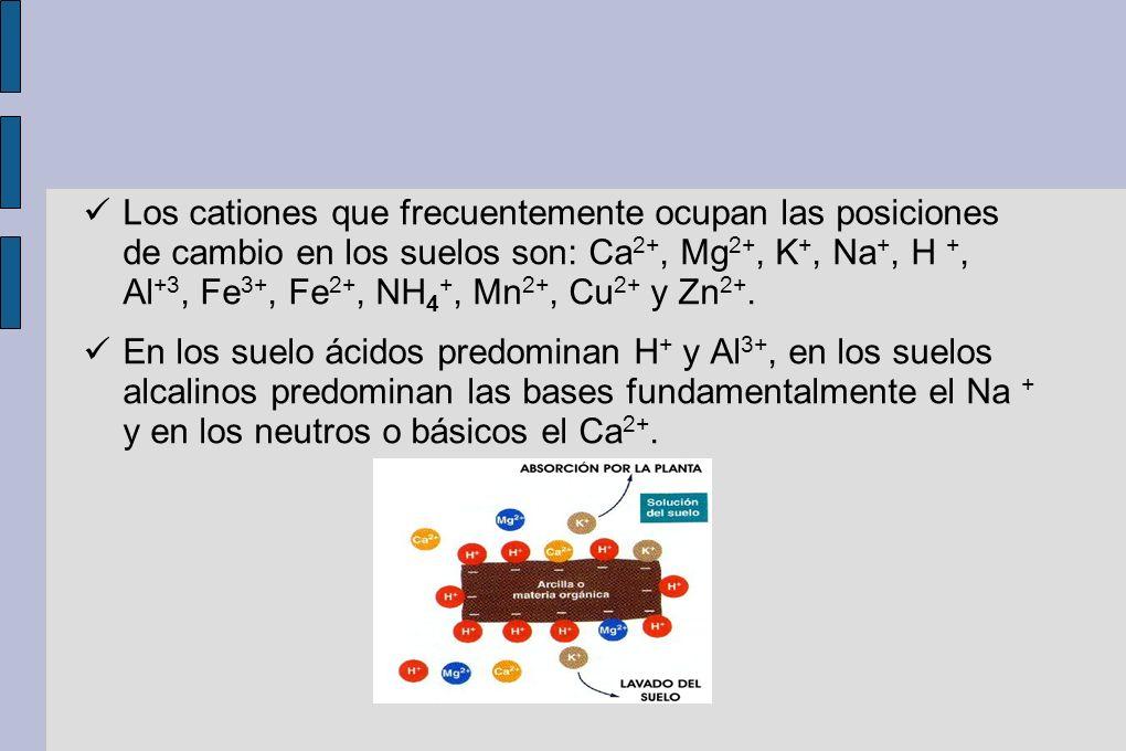 Los cationes que frecuentemente ocupan las posiciones de cambio en los suelos son: Ca 2+, Mg 2+, K +, Na +, H +, Al +3, Fe 3+, Fe 2+, NH 4 +, Mn 2+, C