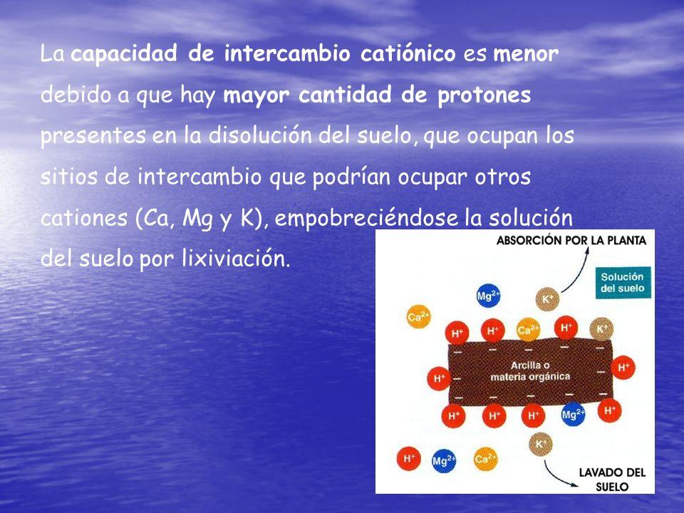 La capacidad de intercambio catiónico es menor debido a que hay mayor cantidad de protones presentes en la disolución del suelo, que ocupan los sitios