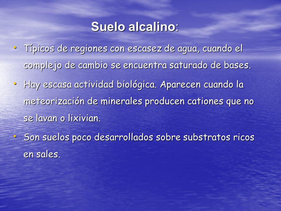 Suelo alcalino: Típicos de regiones con escasez de agua, cuando el complejo de cambio se encuentra saturado de bases. Típicos de regiones con escasez