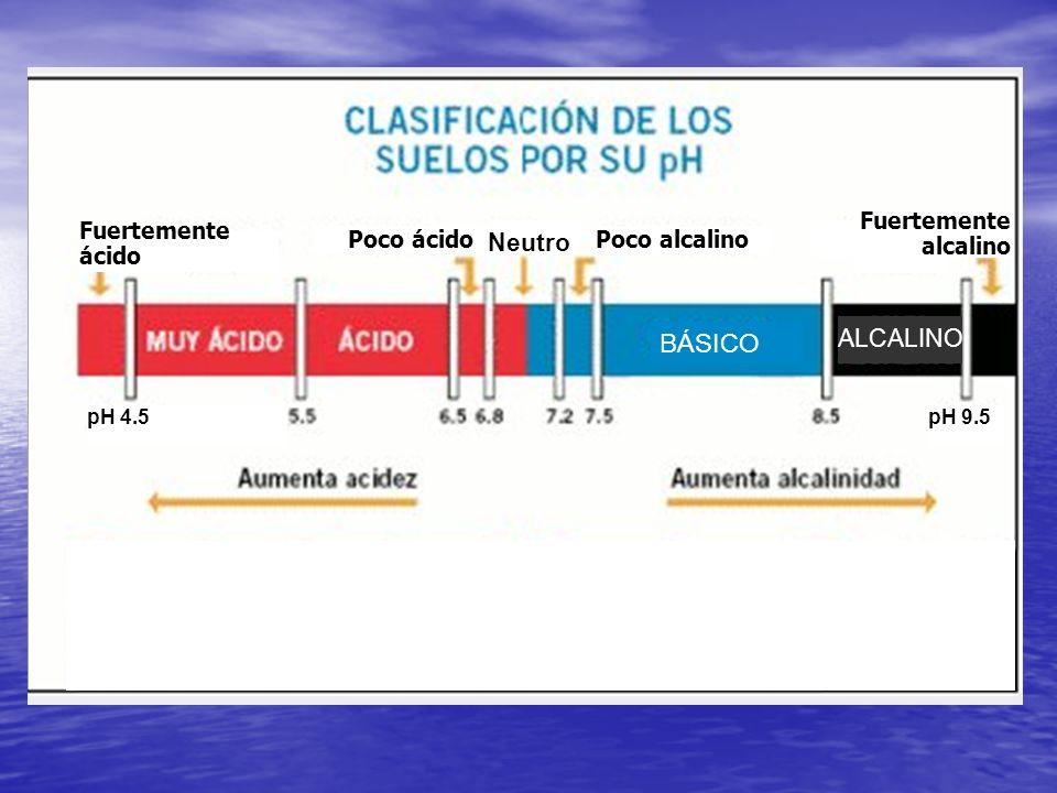 Fuertemente ácido pH 4.5 Poco ácido Poco alcalino Fuertemente alcalino pH 9.5 BÁSICO ALCALINO Neutro