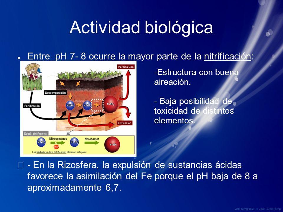 Actividad biológica Entre pH 7- 8 ocurre la mayor parte de la nitrificación: - En la Rizosfera, la expulsión de sustancias ácidas favorece la asimilac