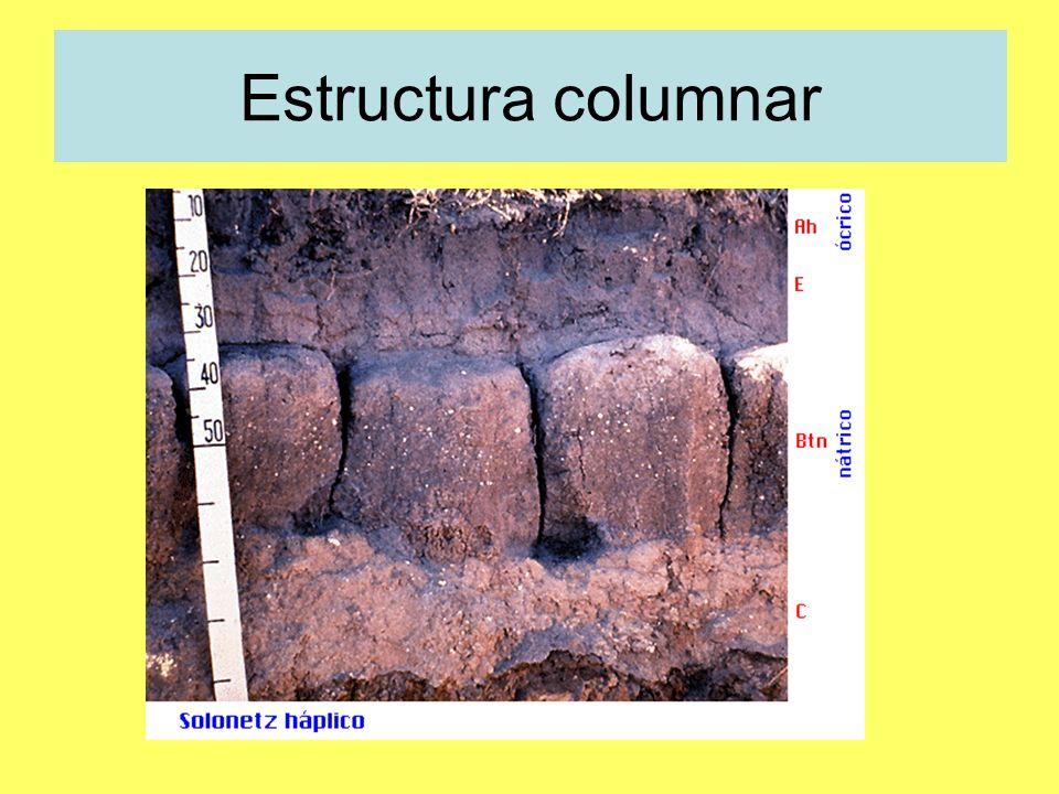 Estructura columnar