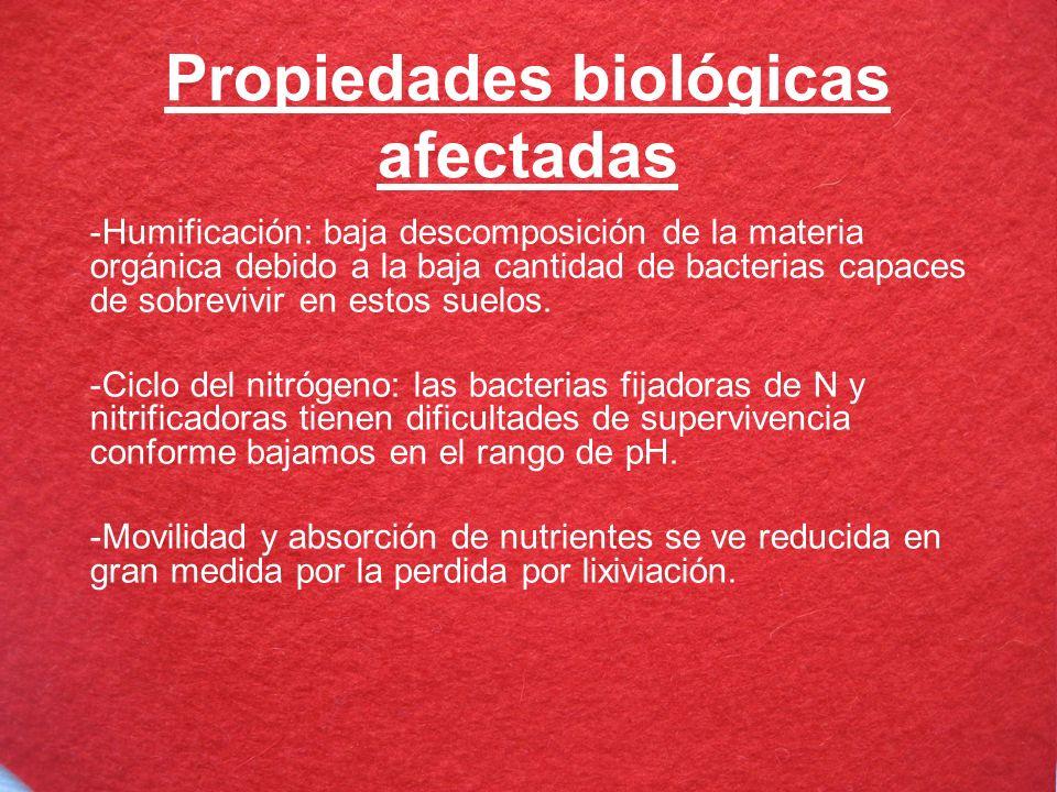 Propiedades biológicas afectadas -Humificación: baja descomposición de la materia orgánica debido a la baja cantidad de bacterias capaces de sobrevivi