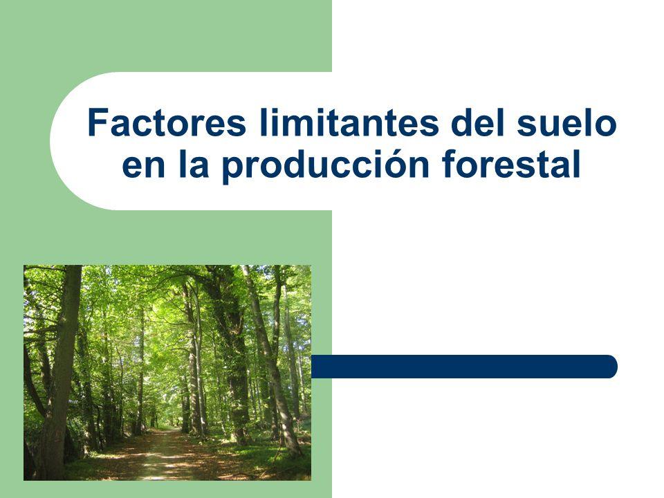 LIMITANTES EN SUELOS La masa forestal se ve afectada por factores como temperatura y topografía de la zona A la hora de analizar la productividad estudiaremos Limitantes Físicos y Químicos del suelo