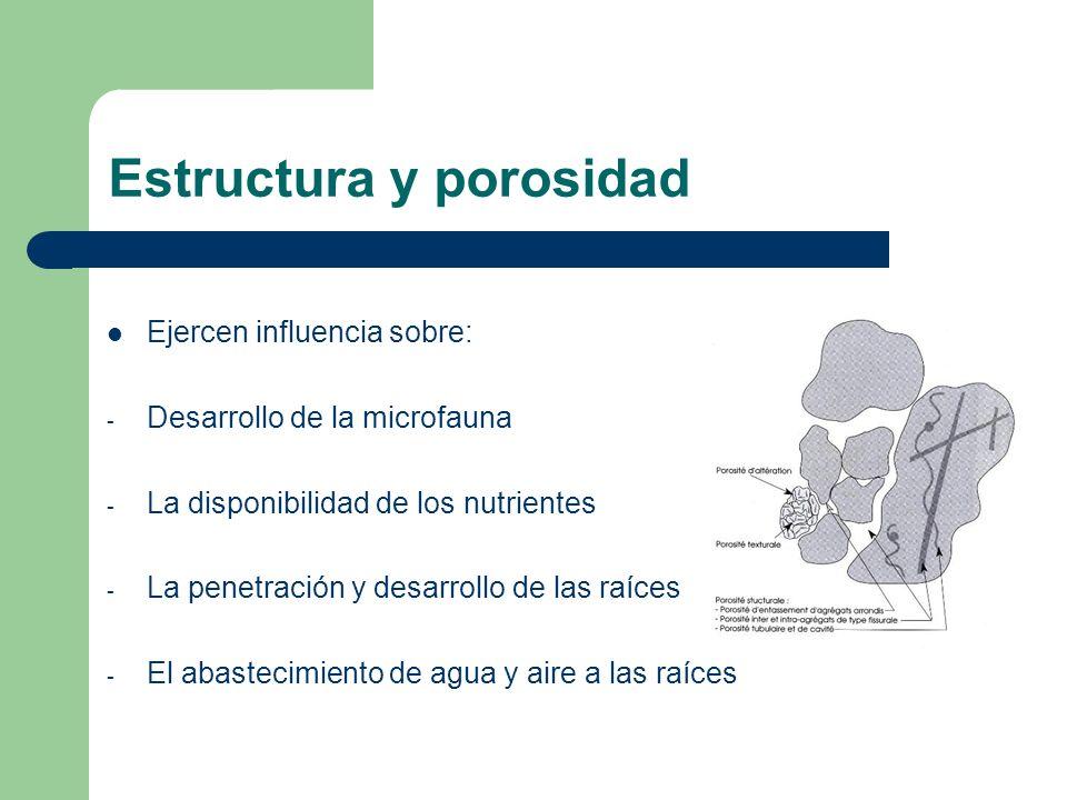 Estructura y porosidad Ejercen influencia sobre: - Desarrollo de la microfauna - La disponibilidad de los nutrientes - La penetración y desarrollo de