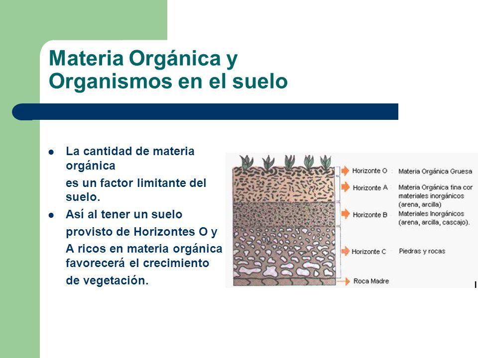 Materia Orgánica y Organismos en el suelo La cantidad de materia orgánica es un factor limitante del suelo. Así al tener un suelo provisto de Horizont