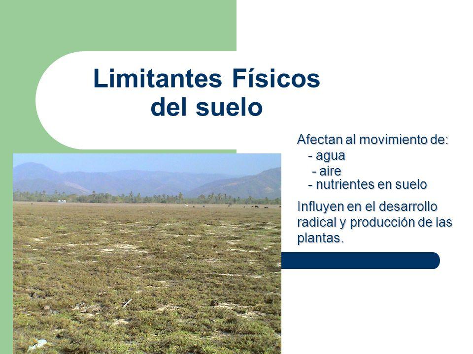 Limitantes Físicos del suelo Afectan al movimiento de: - agua - agua - aire - aire - nutrientes en suelo - nutrientes en suelo Influyen en el desarrol