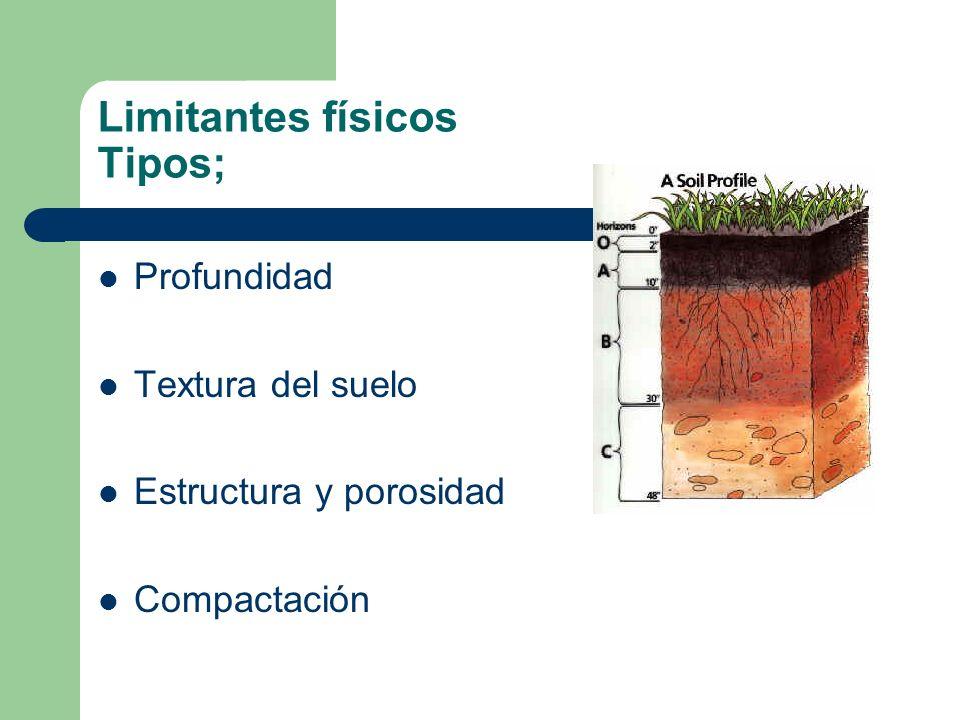 Limitantes físicos Tipos; Profundidad Textura del suelo Estructura y porosidad Compactación