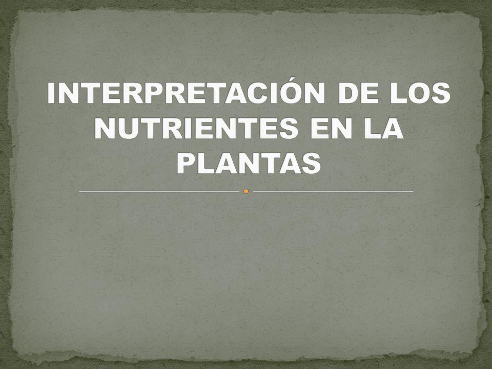 Introducción Relación entre la concentración de nutrientes en planta y la producción.