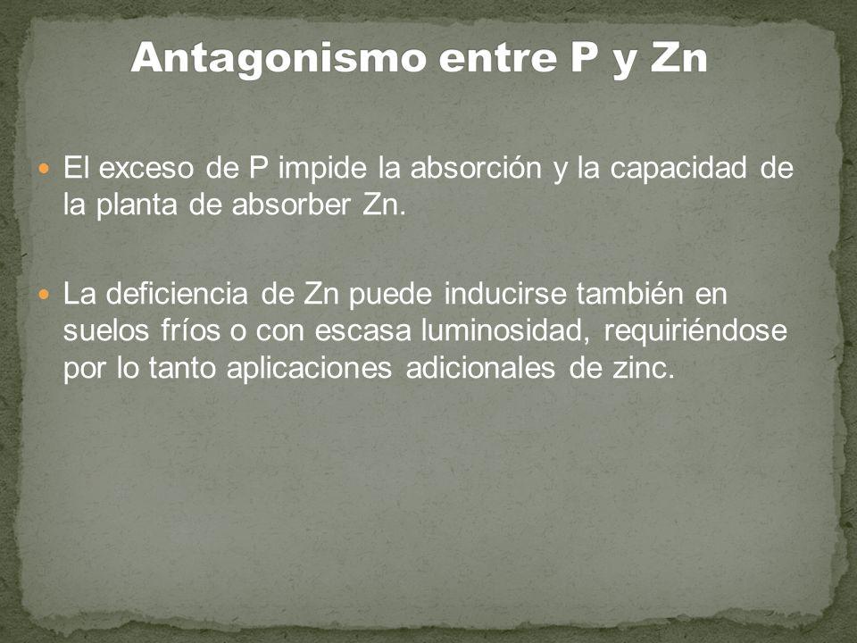 El exceso de P impide la absorción y la capacidad de la planta de absorber Zn. La deficiencia de Zn puede inducirse también en suelos fríos o con esca