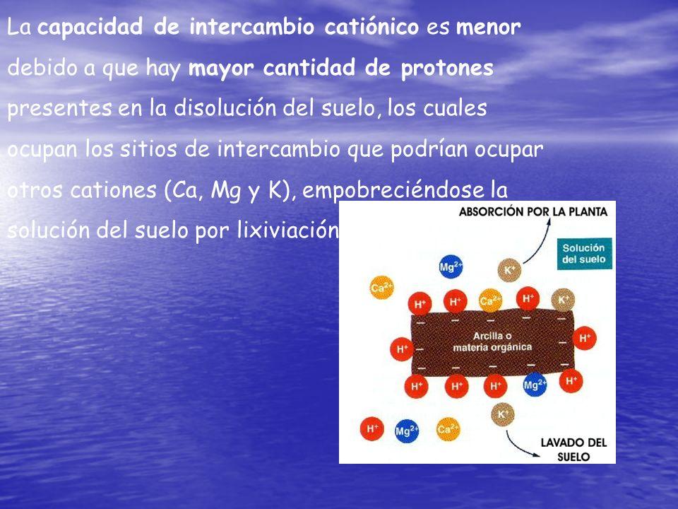 La capacidad de intercambio catiónico es menor debido a que hay mayor cantidad de protones presentes en la disolución del suelo, los cuales ocupan los
