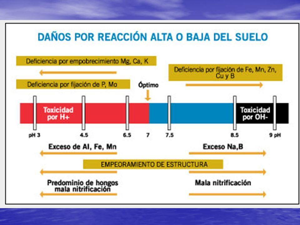 SUELOS BASICOS (7,5-8,5) Las caracteristicas generales de estos suelos son su mala estructura, mala permeabilidad, mala formación de agregados y problemas de salinidad (presencia excesiva de sales).